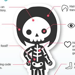 Anatomy of a Digital Animal